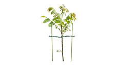 Gardenline Plant Supports