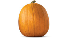Pumpkin. View Details.