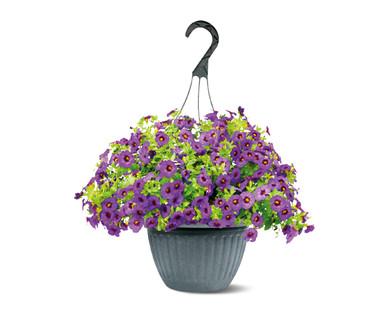 "10"" Purple Calibrachoa Hanging Basket"