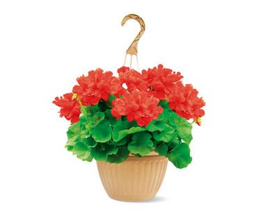 """10"""" Red Geranium Hanging Basket"""