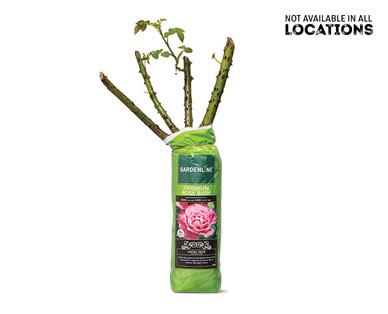 Gardenline Premium Rose Bush View 1