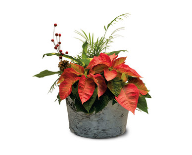 Poinsettia Centerpiece View 2