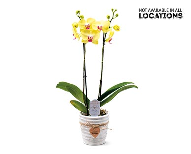 """5"""" Easy Orchid Assorted Colors View 2"""