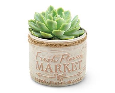 Mason Jar Succulent Assorted Varieties View 2