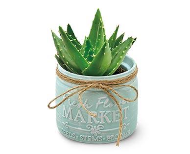 Mason Jar Succulent Assorted Varieties View 3
