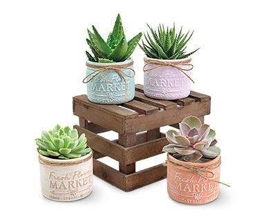 Mason Jar Succulent Assorted Varieties View 5