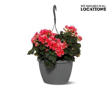 Premium Flowering Plant Assorted Varieties View 1