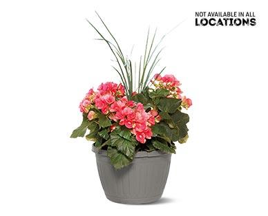 Premium Flowering Plant Assorted Varieties View 2