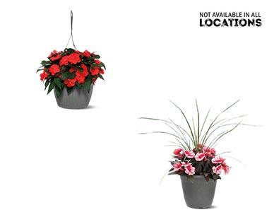 Premium Flowering Plant Assorted Varieties View 3