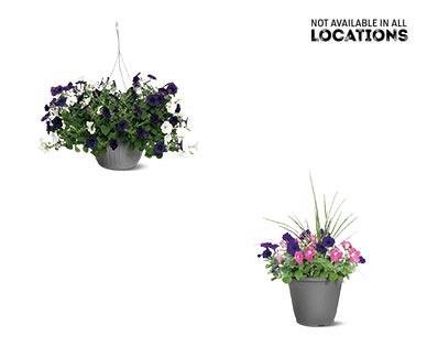 Premium Flowering Plant Assorted Varieties View 4