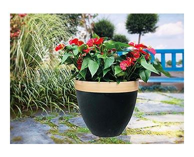 "Belavi 20"" Planter Anthracite Black In Use"